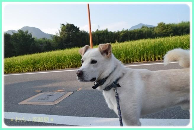 f:id:yasukazu01:20160806204044j:image