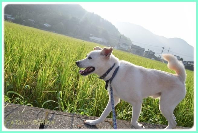 f:id:yasukazu01:20160806204424j:image