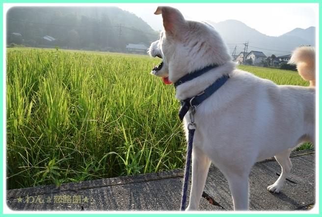 f:id:yasukazu01:20160806204446j:image