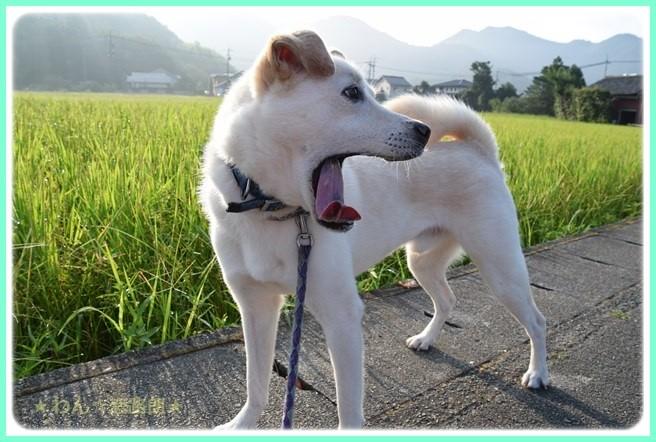 f:id:yasukazu01:20160806204532j:image