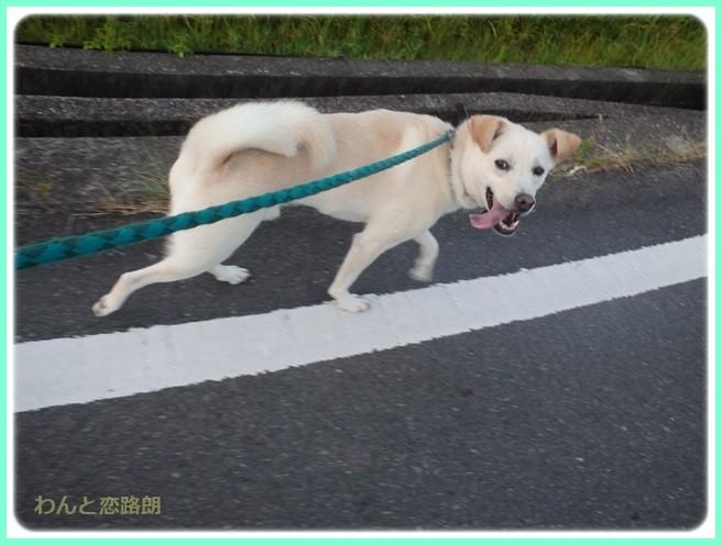 f:id:yasukazu01:20160810214924j:image