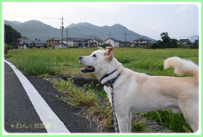 f:id:yasukazu01:20160819211344j:image