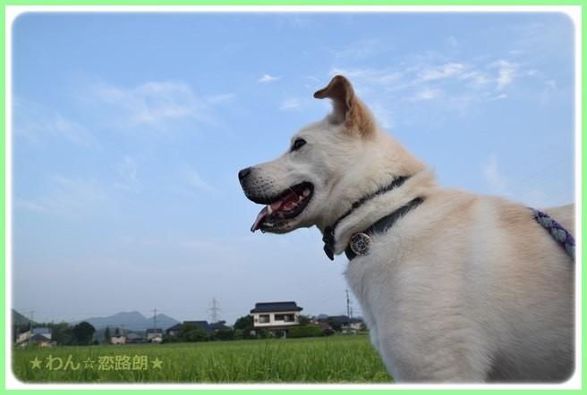 f:id:yasukazu01:20160819211733j:image