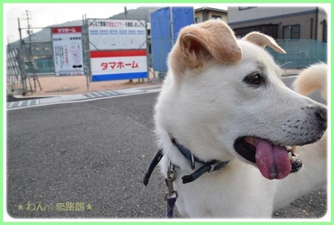 f:id:yasukazu01:20160819212138j:image