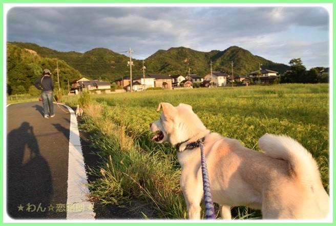 f:id:yasukazu01:20160823203807j:image
