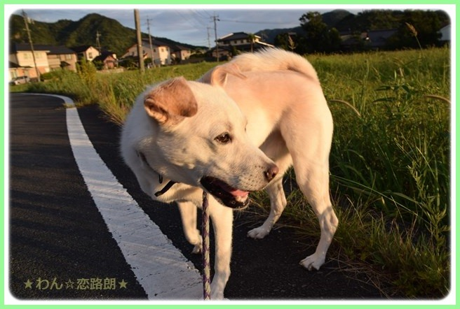 f:id:yasukazu01:20160823203829j:image