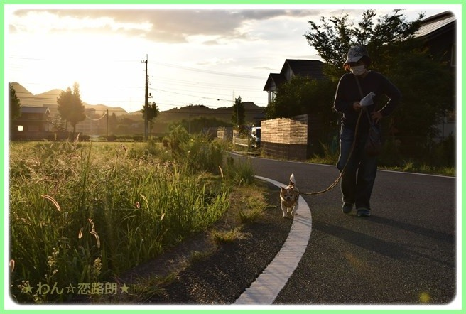 f:id:yasukazu01:20160823203921j:image