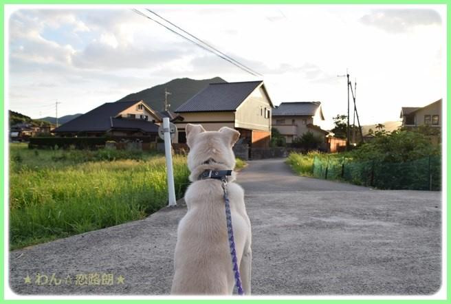 f:id:yasukazu01:20160823204049j:image