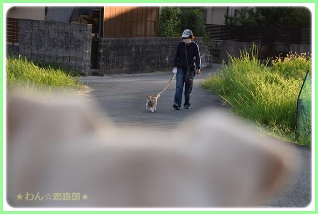 f:id:yasukazu01:20160823204147j:image