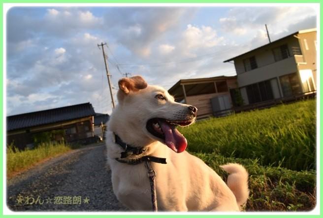 f:id:yasukazu01:20160823204437j:image