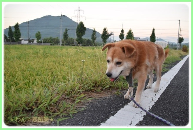 f:id:yasukazu01:20160825204950j:image