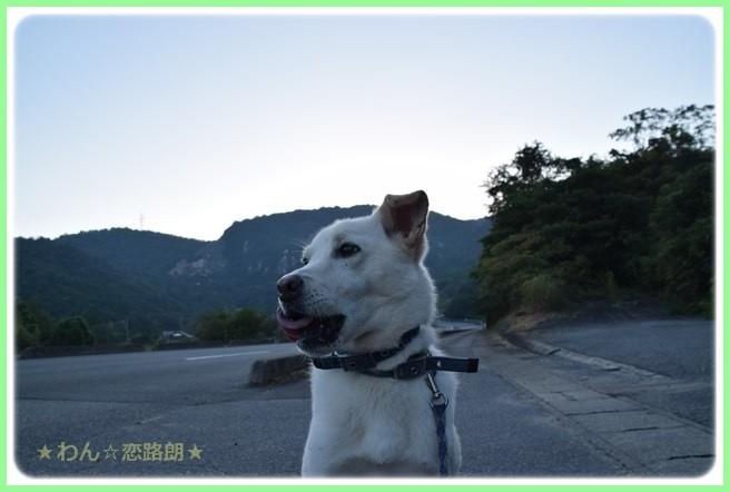 f:id:yasukazu01:20160825205607j:image