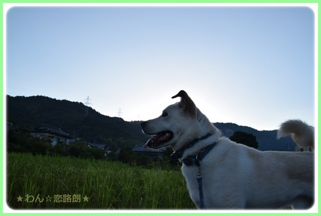 f:id:yasukazu01:20160825205754j:image