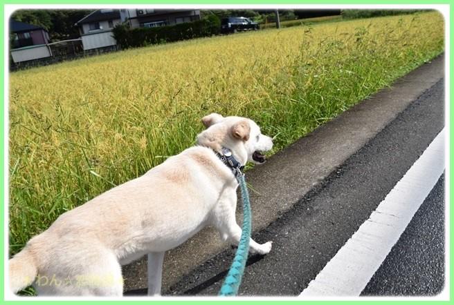 f:id:yasukazu01:20160830202232j:image
