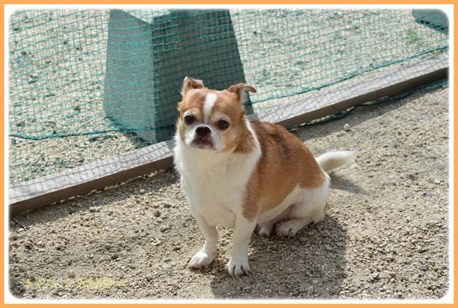 f:id:yasukazu01:20160903201900j:image