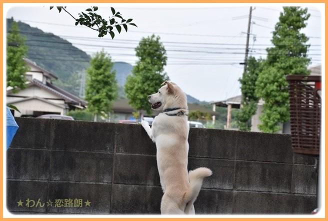 f:id:yasukazu01:20160903203342j:image