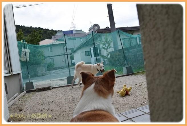 f:id:yasukazu01:20160903205057j:image