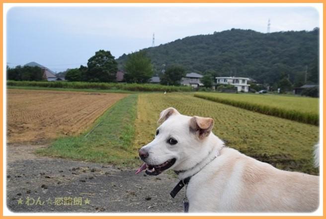 f:id:yasukazu01:20160908203650j:image