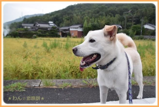 f:id:yasukazu01:20160908203749j:image