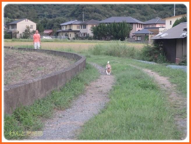 f:id:yasukazu01:20160914221520j:image
