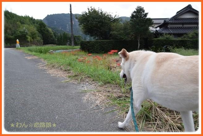 f:id:yasukazu01:20160916191530j:image