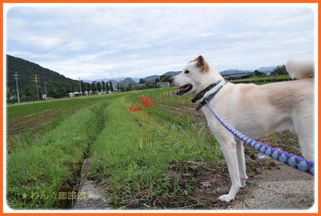 f:id:yasukazu01:20160922210058j:image