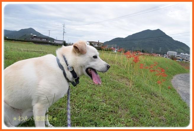 f:id:yasukazu01:20160922210919j:image