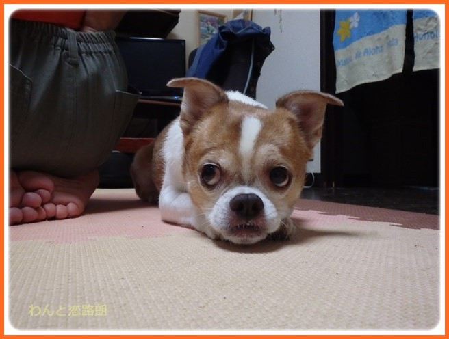 f:id:yasukazu01:20160925204800j:image
