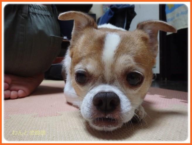 f:id:yasukazu01:20160925204919j:image