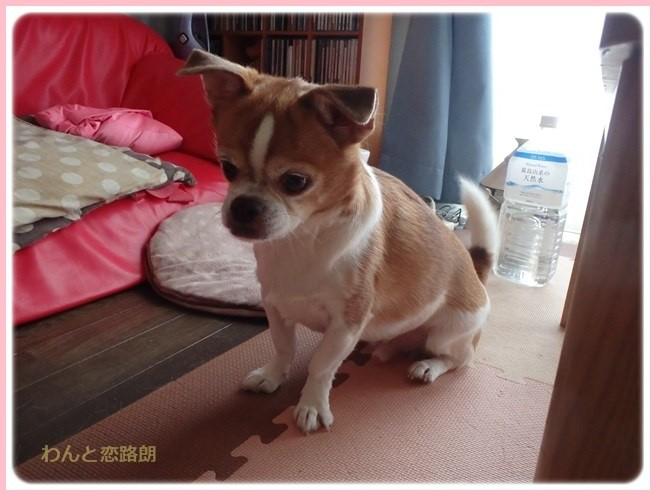 f:id:yasukazu01:20161001212459j:image