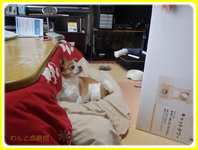 f:id:yasukazu01:20161127124002j:image