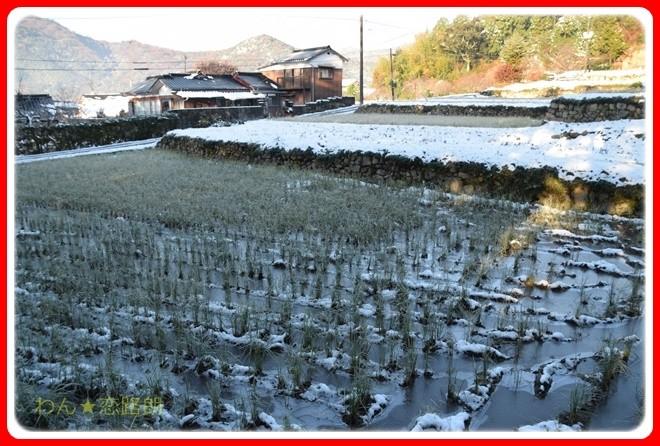 f:id:yasukazu01:20161217083717j:image