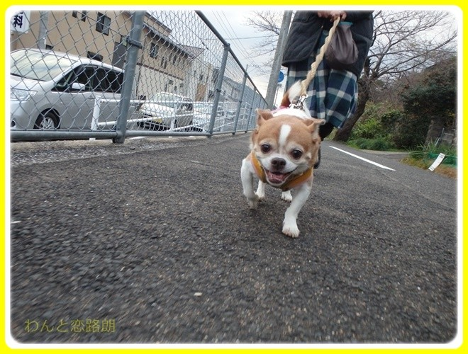 f:id:yasukazu01:20161231162829j:image