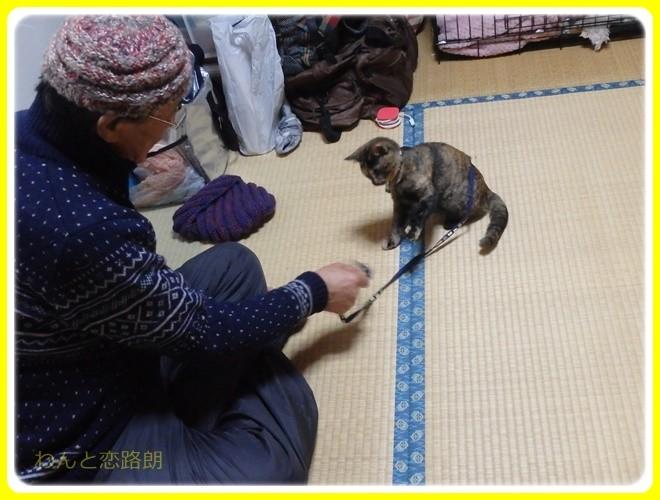 f:id:yasukazu01:20161231183056j:image