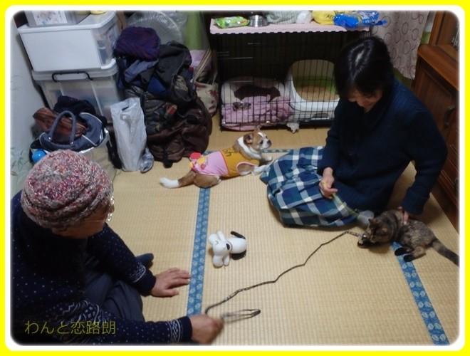 f:id:yasukazu01:20161231183754j:image