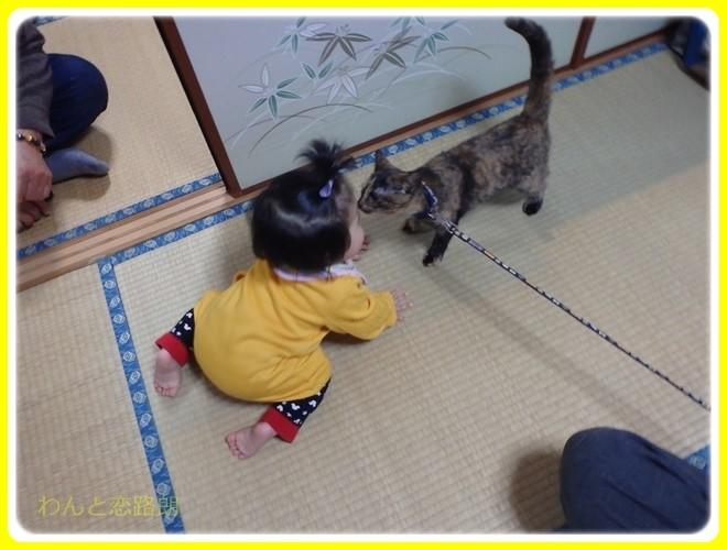 f:id:yasukazu01:20170101190802j:image