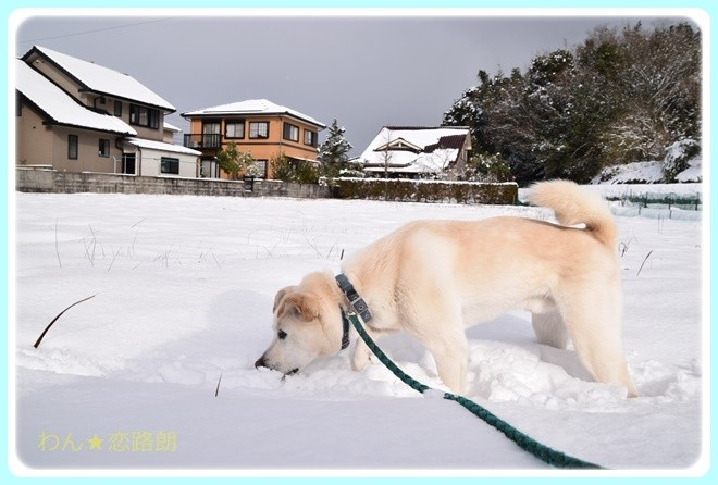 f:id:yasukazu01:20170115103841j:image