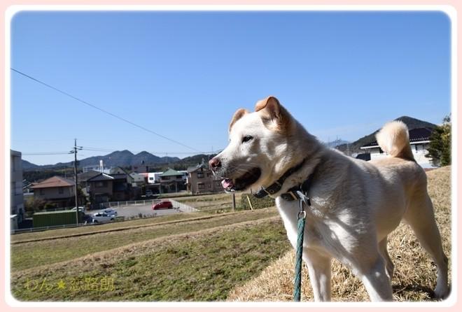 f:id:yasukazu01:20170204131048j:image
