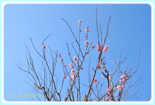 f:id:yasukazu01:20170311092555j:image