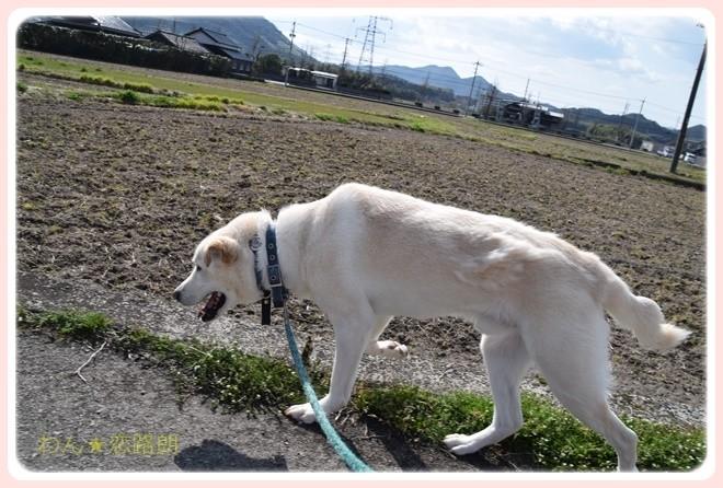 f:id:yasukazu01:20170401152919j:plain