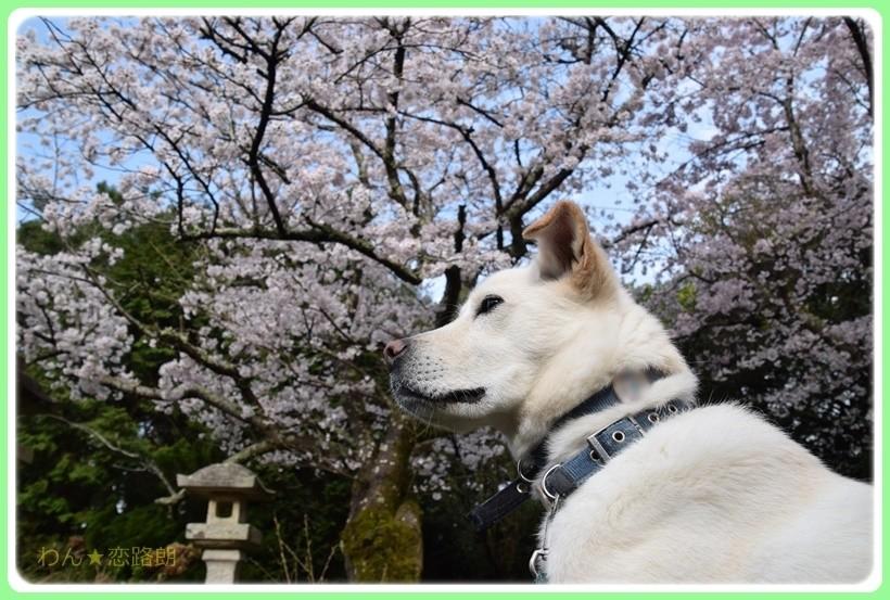 f:id:yasukazu01:20170411161418j:plain