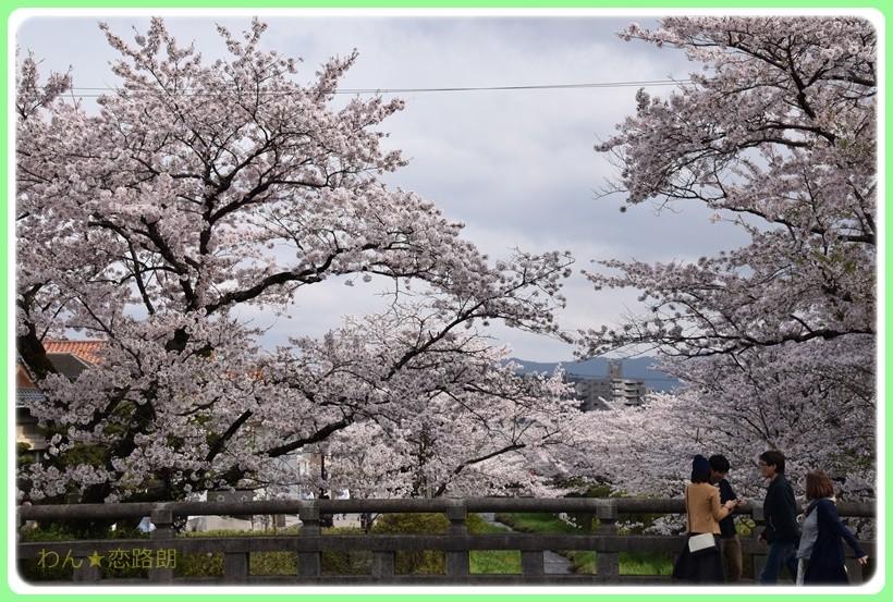 f:id:yasukazu01:20170414144858j:plain