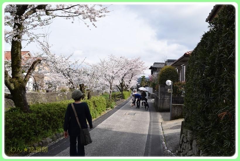 f:id:yasukazu01:20170414145814j:plain