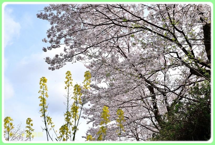 f:id:yasukazu01:20170414150648j:plain