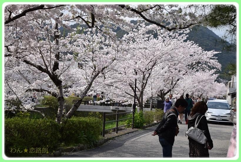 f:id:yasukazu01:20170414150940j:plain