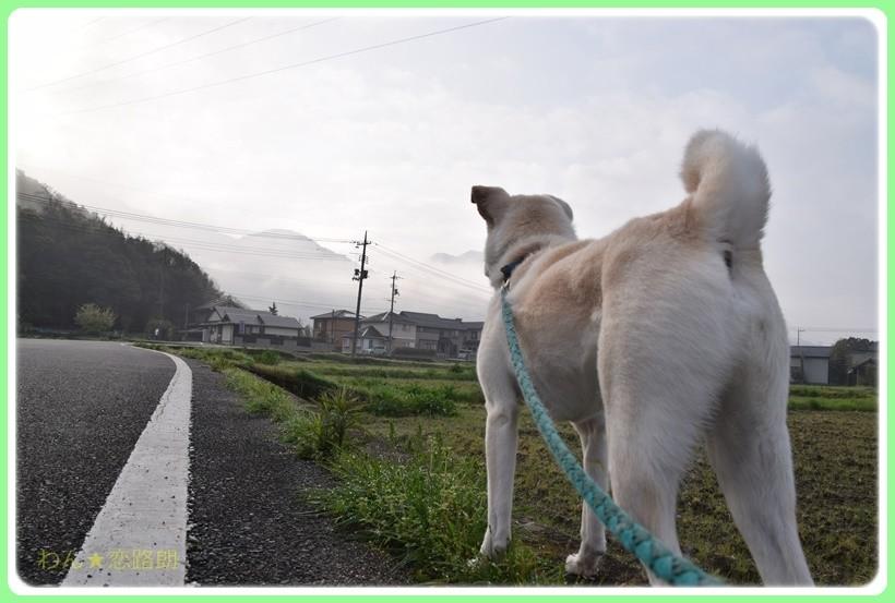 f:id:yasukazu01:20170420194631j:plain