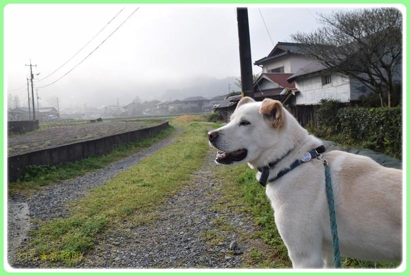 f:id:yasukazu01:20170420194702j:plain