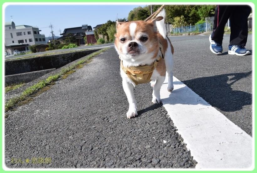 f:id:yasukazu01:20170513202018j:plain