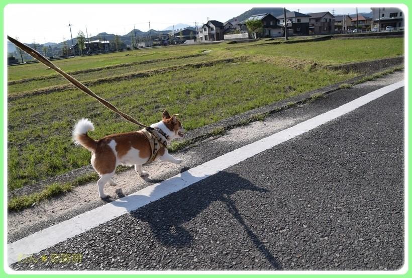 f:id:yasukazu01:20170513203919j:plain