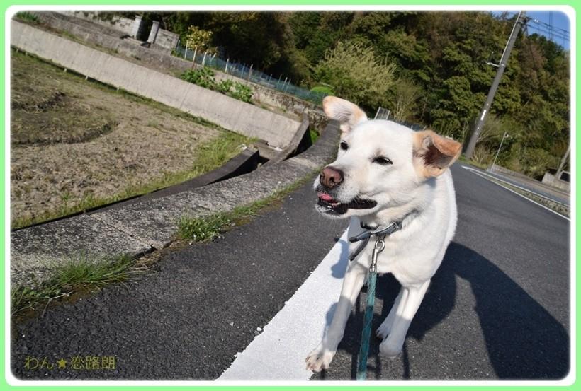 f:id:yasukazu01:20170513204027j:plain